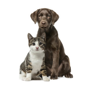 Cat and dog represent animal healthcare market