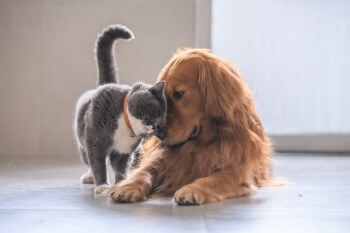 Animal Healthcare - Dog and Cat